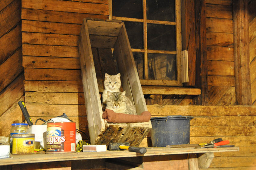 Two Barn Cats