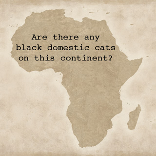 Black cat superstitions in Africa
