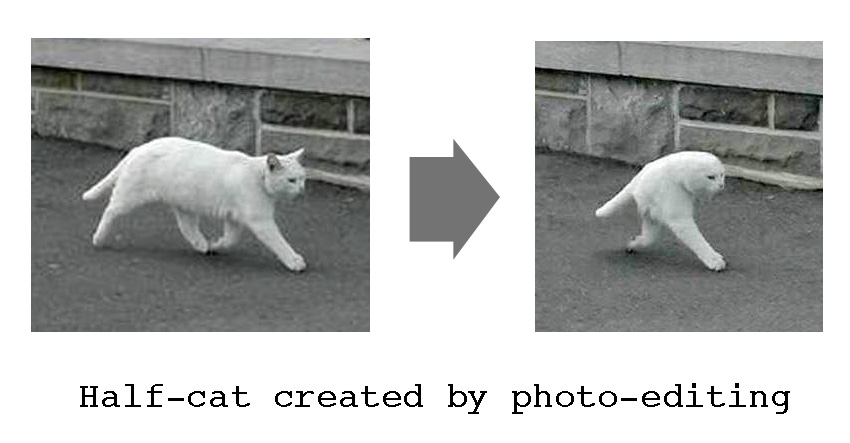 Half-cat created by photo-editing