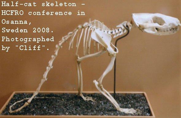 half-cat-skeleton