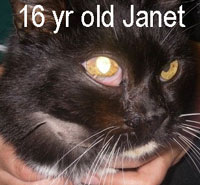 Janet cat with a tumour under her right eye