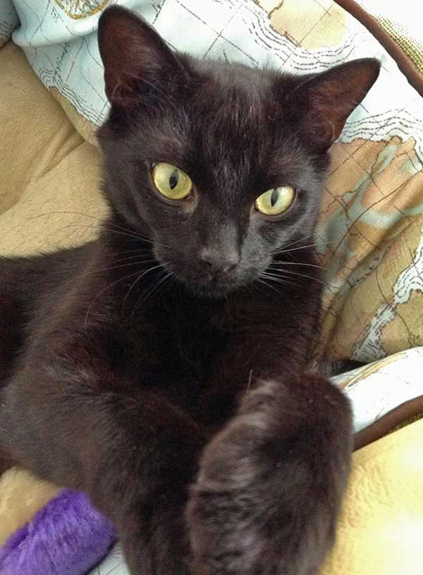 Lisa an unwanted cat who found a home with the help of Kays Hill