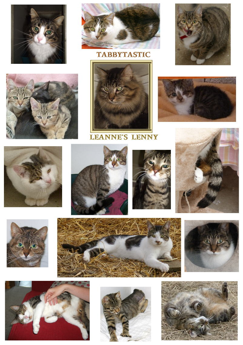 Tabby cats of Kays Hill Animal Sanctuary