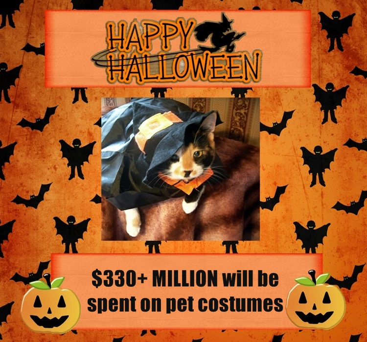 Halloween collage Cats
