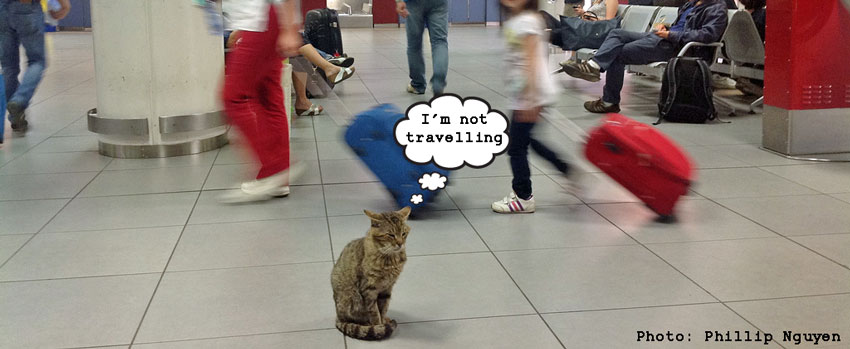 Cat at airport. Pet Travel Scheme. Rabies