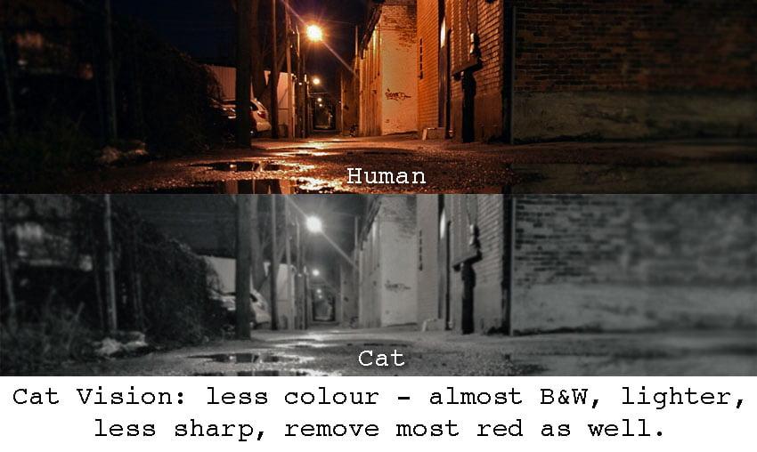 Cat vision nighttime