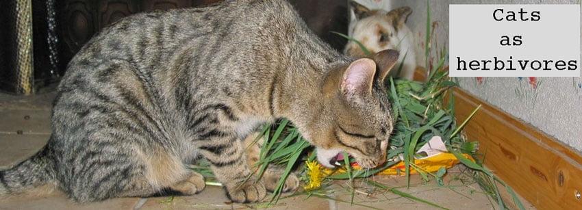 Cats as herbivores