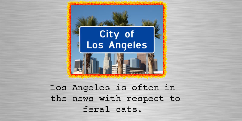 Feral cats of Los Angeles