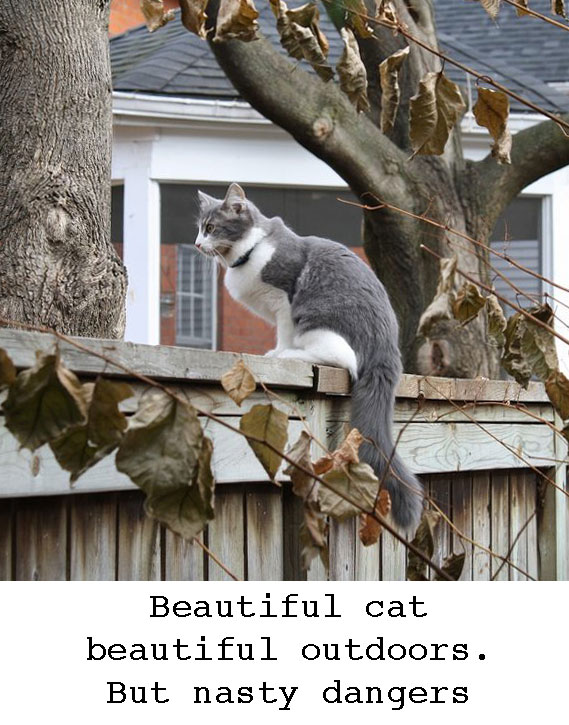 Outdoor cat but possible dangers