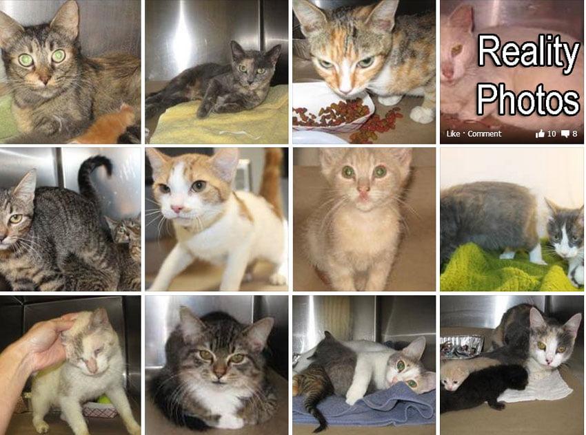 Reality animal rescue photos