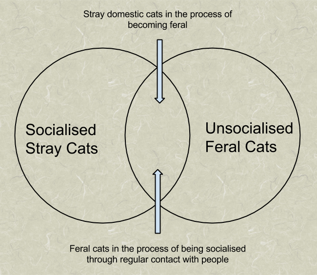 Difference between stray and feral cats