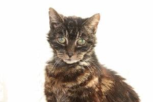 Sarah Hartwell's cat Mr Minns