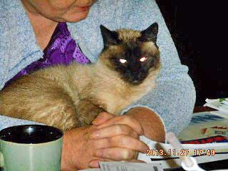 Siamese cat adopts twin sister of deceased owner