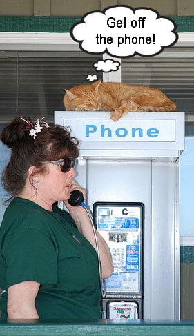 Cat calls police