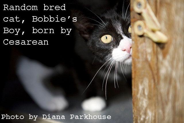 Cat born by Cesarean
