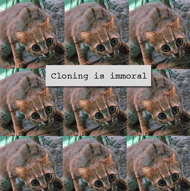 Cloning wild cat species is immoral