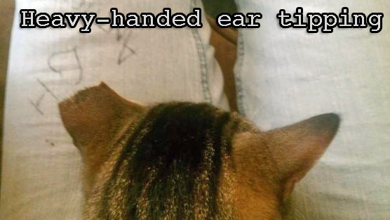 Ear Tipping
