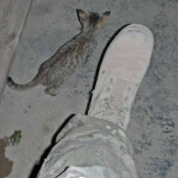 Echo a cat rescued by Nowzad in Afghanistan