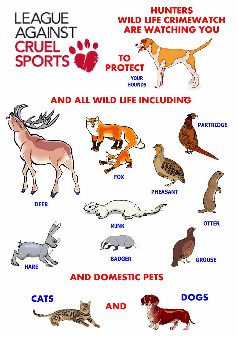 League Against Cruel Sports added cats to their list of animals that  are subject to wild life crimes