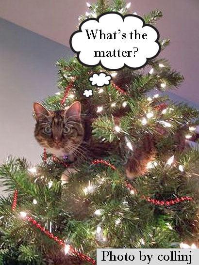 Injuries to pets at Christmas statistics