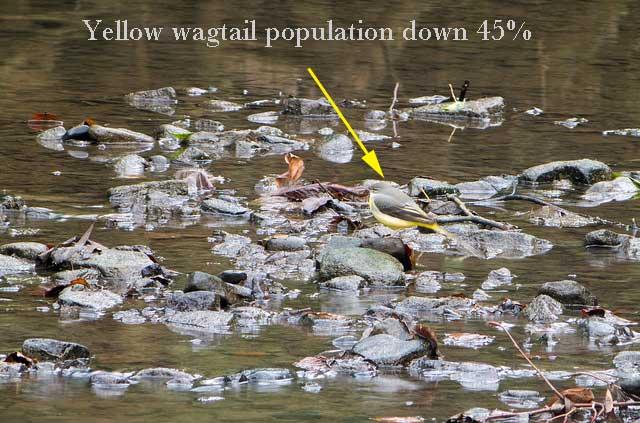 Bird populaton decline uk
