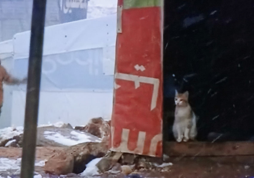 Cat in a Syrian refugee camp in Lebanon