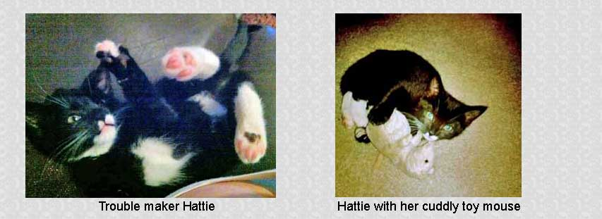 Hattie kitten