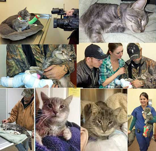 Jiggles a cat that was shot but who recovered