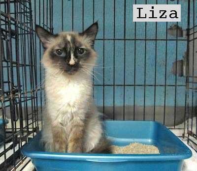 Liza rescue cat
