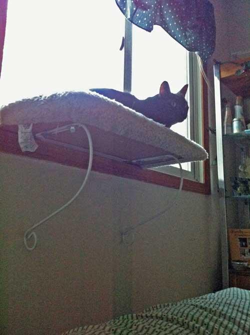 monty-a-black-cat-1