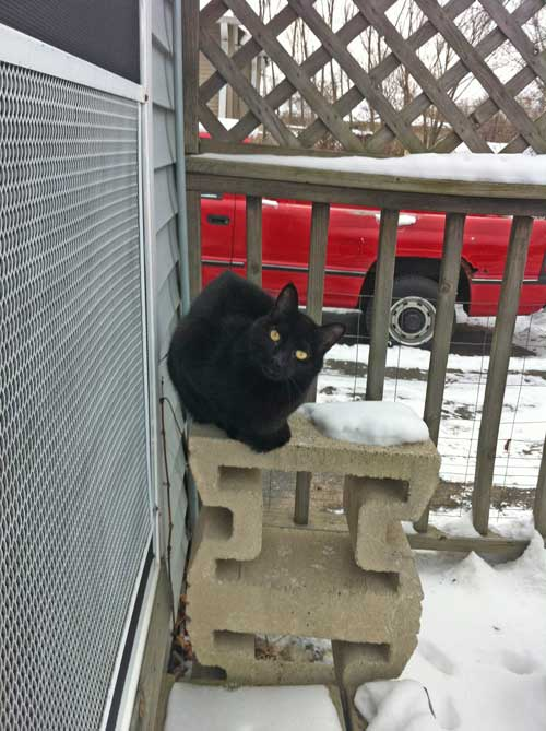 monty-a-black-cat-2