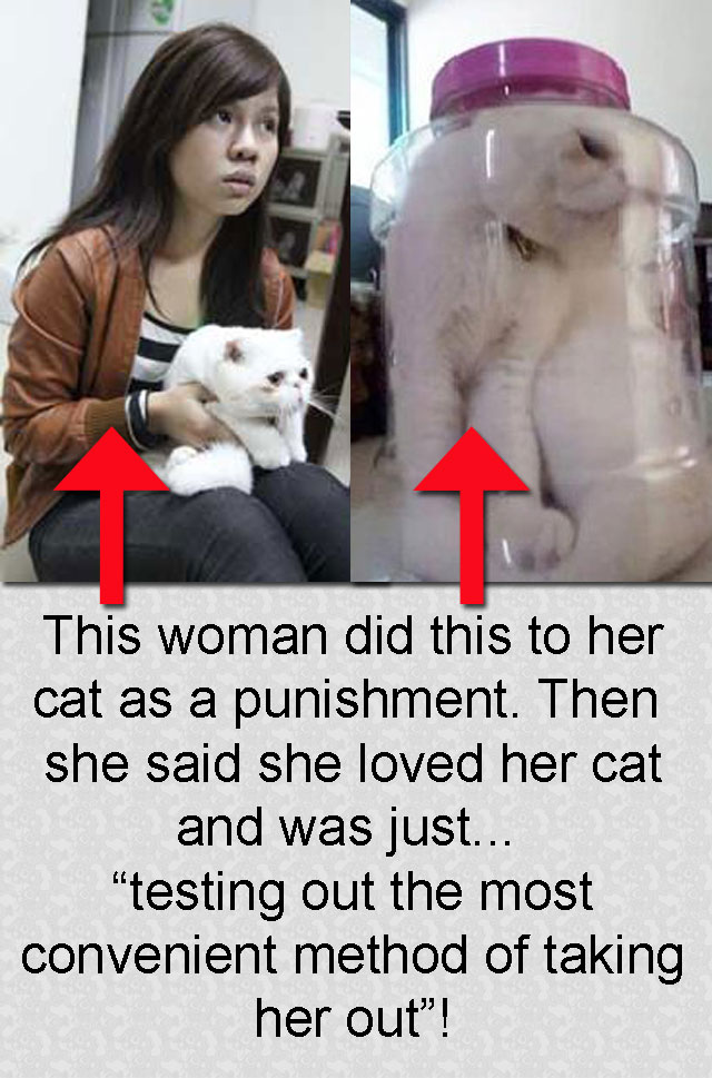Taiwan cat abuse story persian cat