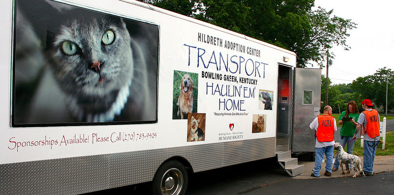 Transporting and transferring cats and dogs