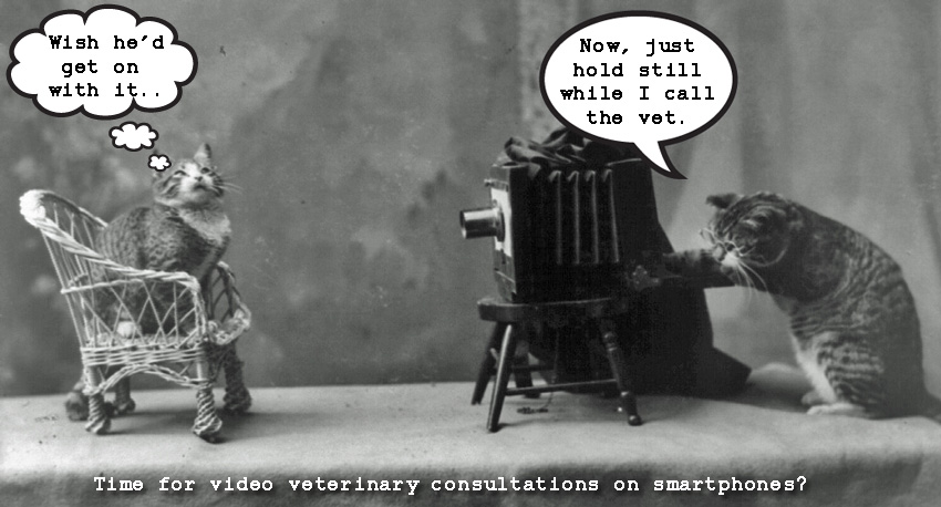 Vet consultations by video link