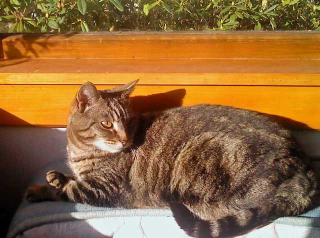 cassy-sleeping-in-the-sun