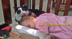 Cat allogrooms baby
