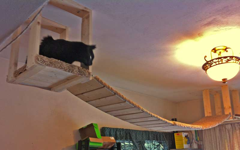 Cat on ceiling mounted indoor walkway to enrichment environment