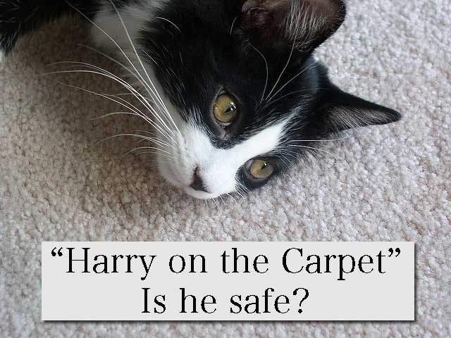cat on a carpet but is he safe?
