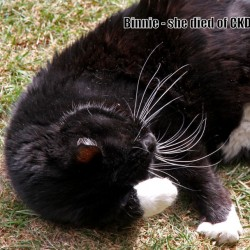 Cat who had chronic kidney disease (CKD)
