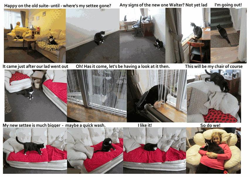 Cats investigate new furniture