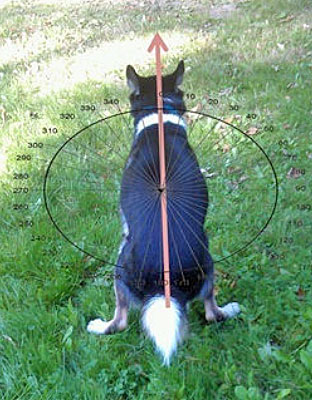 Dogs sense the earth's magnetic field