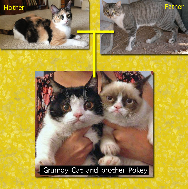 Grumpy Cat family tree