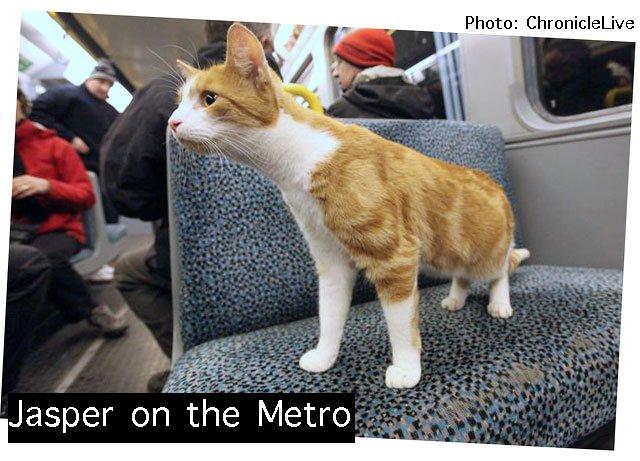 Jasper on the metro train
