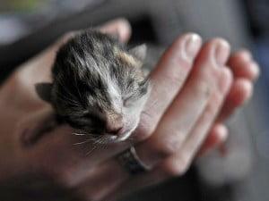 Kitten imprinting