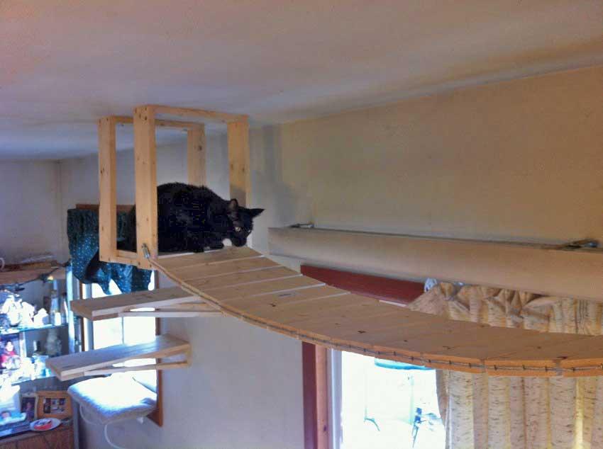 Monty on a platform