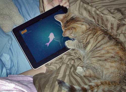 tabby cat looking at fish on iPad screen