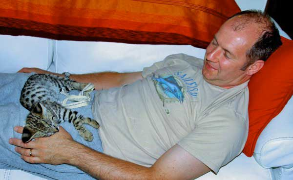 Martin Stucki and Focus and F1 Savannah cat