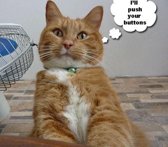 Are cats manipulative?