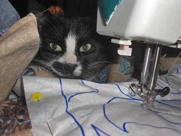 Cat quilts
