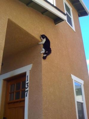 Cat wall climbing